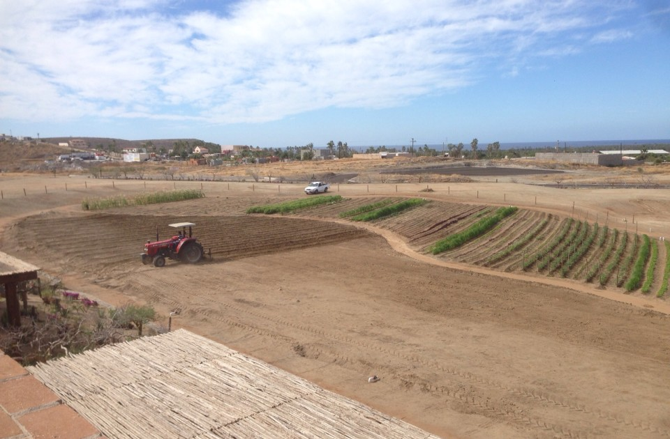 tractor working on the garden in the Tres Santos community in Todos Santos, Mexico