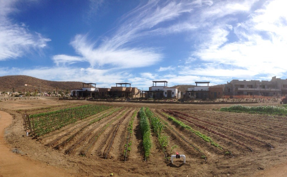 Garden community development at Tres Santos in Todos Santos, Mexico