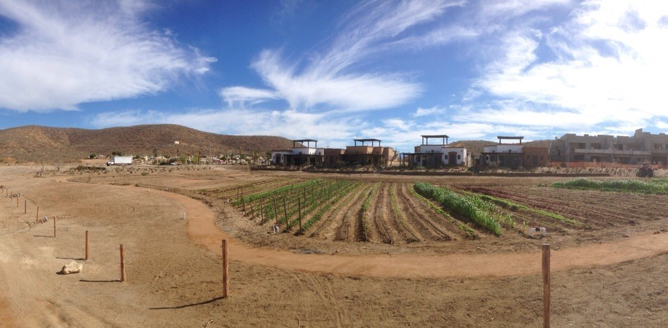 tractor working on the garden- tres santos in todos santos