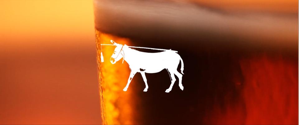 Donkey- Baja Brewing in Cabo- Tres Santos